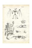 Bat, 1863-79 Giclée-tryk af Raimundo Petraroja