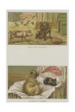 Humorous Dogs Reproduction procédé giclée par S.t. Dadd