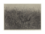 Grass of the Desert, a Scene of Travel in South Africa Giclée-tryk af Thomas Baines