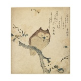 Owl, Early 19th Century Giclee Print by Toyota Hokkei