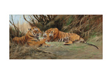 Tigers at Dawn, 1913 Giclee Print by Wilhelm Kuhnert