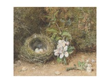 Bird's Nest with Sprays of Apple Blossoms Giclee Print by William Henry Hunt