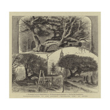 Transplantation of the Ancient Buckland Yew at Dover Reproduction procédé giclée par William Henry James Boot