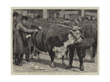 The Cattle Show at the Agricultural Hall, Judging the Herefords Giclee Print by William Small