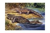 Dwarf Crocodile or Bony Crocodile (Osteolaemus Tetraspis), Crocodylidae Impressão giclée