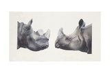 Rhinoceros Heads, Black Rhinoceros (Diceros Bicornis) and Rhinoceros (Genus) Giclée-Druck