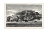 The Great Banyan Tree (Ficus Indica) in the Botanical Gardens, Calcutta, India Giclee Print