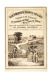 Advertisement for Southerner Rights Segars, Pub. C.1859 Giclee Print