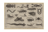 Reptiles and Insects of Various Parts of the World Lámina giclée