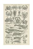 Crustaceans Giclée-tryk