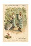 Chasselas De Fontainebleau Grapes Lámina giclée