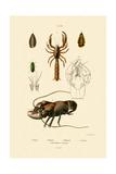 Great Green Bush Cricket, 1833-39 Giclée-tryk