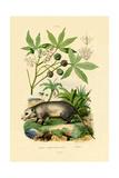 Common Opossum, 1833-39 Lámina giclée