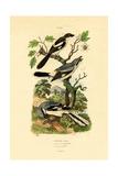 Shrikes, 1833-39 Reproduction procédé giclée
