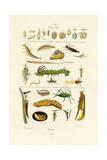 Insects, 1833-39 Lámina giclée