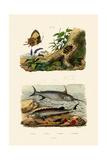 Sturgeon, 1833-39 Giclee Print