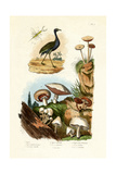 Agami Heron, 1833-39 Giclée-vedos