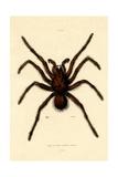 Tarantula, 1833-39 Giclée-Druck