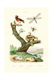 Ants, 1833-39 Lámina giclée