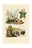 Sugarcane, 1833-39 Giclée-vedos