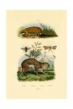 Anteater, 1833-39 Lámina giclée