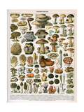 Decorative Print of 'Champignons' by Demoulin, 1897 Giclée-tryk