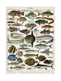 Decorative Print of 'Poissons' by Demoulin, 1897 Giclée-tryk