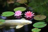 Koi Pond Photographic Print by Julianna Olah