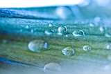 Abstract Water Drop on Flower Fresh Color Fotografie-Druck von  queen21