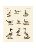 Different Kinds of Waterbirds Reproduction procédé giclée