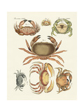 Different Kinds of Crabs Giclée-tryk