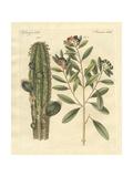 Medical Plants Giclée-vedos