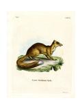Yellow Mongoose Lámina giclée