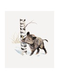 Close-Up of a Wild Boar Rubbing His Neck on a Tree Trunk (Sus Scrofa) Giclée-tryk
