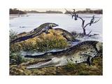 American Crocodile (Crocodylus Acutus), Crocodylidae, Drawing Giclée-tryk