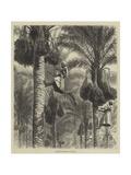 Gathering Dates in Ceylon Giclee Print