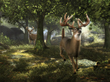 Big Buck Whitetail Deer Autocollant mural par Mike Colesworthy
