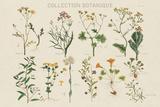 Collection Botanique Reproduction procédé giclée par Maria Mendez