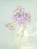 Candy Flowers V Giclee Print by Shana Rae