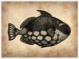 Vintage Fish Cartel de plástico por  NaxArt