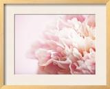Fade to Pink Impressão fotográfica emoldurada por Doug Chinnery
