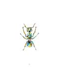 Ant Prints by Alexis Marcou