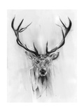 Red Deer Print by Alexis Marcou