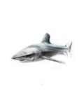 Shark 1 Kunstdrucke von Alexis Marcou