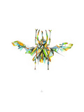 Actaeon Beetle Giclée-Premiumdruck von Alexis Marcou