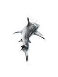 Shark 3 Kunstdruck von Alexis Marcou