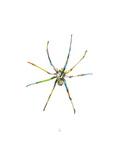 Spider Giclée-Premiumdruck von Alexis Marcou