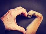 A Person and a Dog Making a Heart Shape with the Hand and Paw Toned with a Retro Vintage Instagram Photographic Print by  graphicphoto