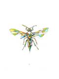 Hornet Kunstdruck von Alexis Marcou