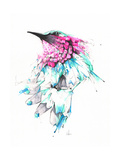 Kolibri Kunstdrucke von Alexis Marcou